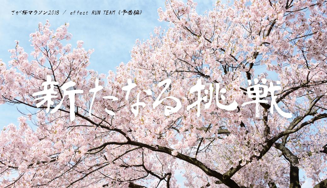 さが桜マラソンにメディアランナーとして参加します!